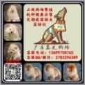 广州松狮犬出售  广州松狮多少钱一只 广东暮光狗场